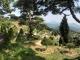 공원묘지 수목장 #2