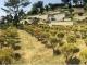 공원묘지 수목장 #4