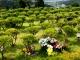 공원묘지 수목장 #5