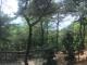 수목장 #1
