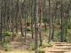 수목장 #2