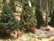 수목장 #4