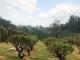 김포수목장 #1
