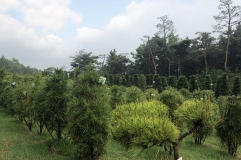김포수목장 by 하늘나무