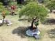 수목장 #5