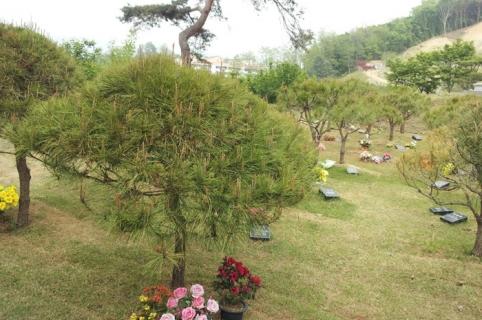 수목장 by 하늘나무