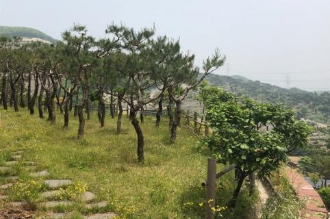 분당자연장 by 하늘나무